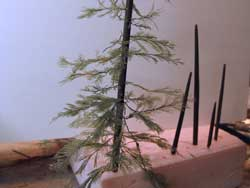 air fern pine tree
