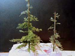 sprayed air fern pine tree