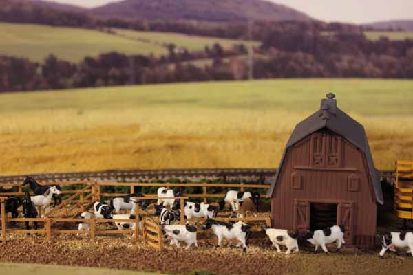 ho model cows in barn scene
